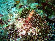 Asisbiz Dive 20 Philippines Mindoro Sabang Shark Cave Oct 2005 20