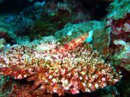 Asisbiz Dive 20 Philippines Mindoro Sabang Shark Cave Oct 2005 21