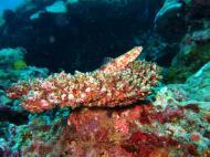 Asisbiz Dive 20 Philippines Mindoro Sabang Shark Cave Oct 2005 22