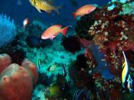 Asisbiz Dive 20 Philippines Mindoro Sabang Shark Cave Oct 2005 23