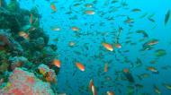 Asisbiz Dive 27 Philippines Mindoro Verdi Island Nov 2005 02