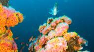 Asisbiz Dive 27 Philippines Mindoro Verdi Island Nov 2005 03