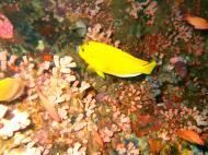 Asisbiz Dive 27 Philippines Mindoro Verdi Island Nov 2005 09