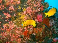 Asisbiz Dive 27 Philippines Mindoro Verdi Island Nov 2005 10