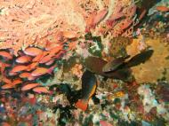Asisbiz Dive 27 Philippines Mindoro Verdi Island Nov 2005 12