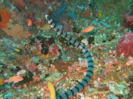 Asisbiz Dive 27 Philippines Mindoro Verdi Island Nov 2005 15