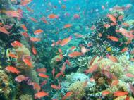 Asisbiz Dive 27 Philippines Mindoro Verdi Island Nov 2005 26