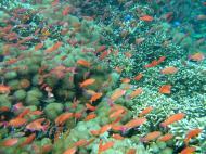 Asisbiz Dive 27 Philippines Mindoro Verdi Island Nov 2005 27