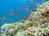 Asisbiz Dive 27 Philippines Mindoro Verdi Island Nov 2005 28