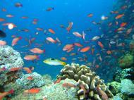 Asisbiz Dive 27 Philippines Mindoro Verdi Island Nov 2005 29