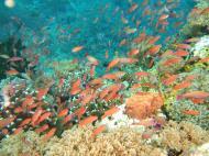 Asisbiz Dive 27 Philippines Mindoro Verdi Island Nov 2005 30