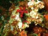 Asisbiz Dive 27 Philippines Mindoro Verdi Island Nov 2005 31