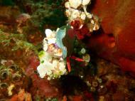 Asisbiz Dive 27 Philippines Mindoro Verdi Island Nov 2005 33
