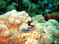 Asisbiz Dive 27 Philippines Mindoro Verdi Island Nov 2005 35