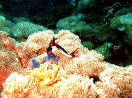 Asisbiz Dive 27 Philippines Mindoro Verdi Island Nov 2005 36