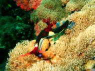 Asisbiz Dive 27 Philippines Mindoro Verdi Island Nov 2005 39
