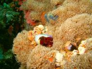 Asisbiz Dive 27 Philippines Mindoro Verdi Island Nov 2005 40