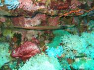 Asisbiz Dive 27 Philippines Mindoro Verdi Island Nov 2005 48