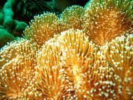 Asisbiz Dive 27 Philippines Mindoro Verdi Island Nov 2005 54