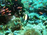 Asisbiz Dive 27 Philippines Mindoro Verdi Island Nov 2005 58