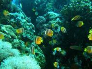 Asisbiz Dive 27 Philippines Mindoro Verdi Island Nov 2005 59