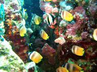 Asisbiz Dive 27 Philippines Mindoro Verdi Island Nov 2005 60