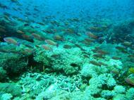 Asisbiz Dive 27 Philippines Mindoro Verdi Island Nov 2005 65