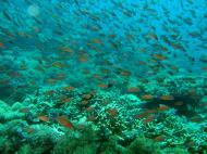 Asisbiz Dive 27 Philippines Mindoro Verdi Island Nov 2005 67