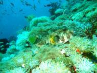 Asisbiz Dive 27 Philippines Mindoro Verdi Island Nov 2005 75