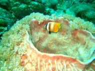 Asisbiz Dive 27 Philippines Mindoro Verdi Island Nov 2005 78