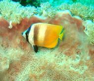 Asisbiz Dive 27 Philippines Mindoro Verdi Island Nov 2005 80