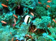Asisbiz Dive 27 Philippines Mindoro Verdi Island Nov 2005 81