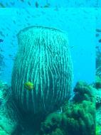 Asisbiz Dive 27 Philippines Mindoro Verdi Island Nov 2005 85