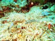 Asisbiz Dive 27 Philippines Mindoro Verdi Island Nov 2005 90