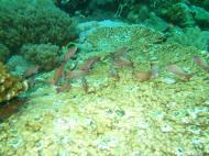 Asisbiz Dive 27 Philippines Mindoro Verdi Island Nov 2005 93
