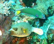 Asisbiz Dive 27 Philippines Mindoro Verdi Island Nov 2005 95