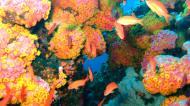 Asisbiz Dive 28 Philippines Mindoro Verdi Island June 2005 06