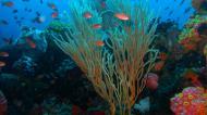 Asisbiz Dive 28 Philippines Mindoro Verdi Island June 2005 09