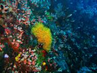 Asisbiz Dive 28 Philippines Mindoro Verdi Island June 2005 10