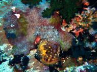 Asisbiz Dive 28 Philippines Mindoro Verdi Island June 2005 13