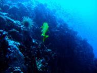 Asisbiz Dive 28 Philippines Mindoro Verdi Island June 2005 14