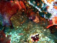 Asisbiz Dive 28 Philippines Mindoro Verdi Island June 2005 21