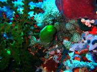 Asisbiz Dive 28 Philippines Mindoro Verdi Island June 2005 22