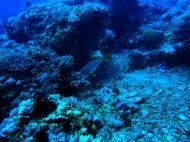 Asisbiz Dive 28 Philippines Mindoro Verdi Island June 2005 30