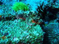 Asisbiz Dive 28 Philippines Mindoro Verdi Island June 2005 31