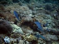 Asisbiz Dive 28 Philippines Mindoro Verdi Island June 2005 33