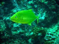 Asisbiz Dive 28 Philippines Mindoro Verdi Island June 2005 34