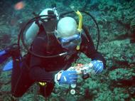 Asisbiz Dive 28 Philippines Mindoro Verdi Island June 2005 45