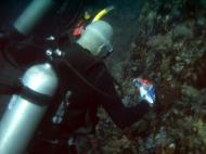 Asisbiz Dive 28 Philippines Mindoro Verdi Island June 2005 47