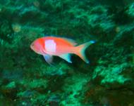 Asisbiz Dive 30 Philippines Mindoro Talipanan White Beach Jan 2006 05